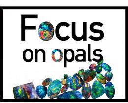 focusonopals