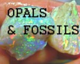 FOSSIL OPALS