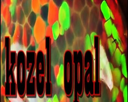 kozelopal
