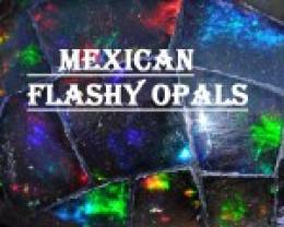 flashyopals