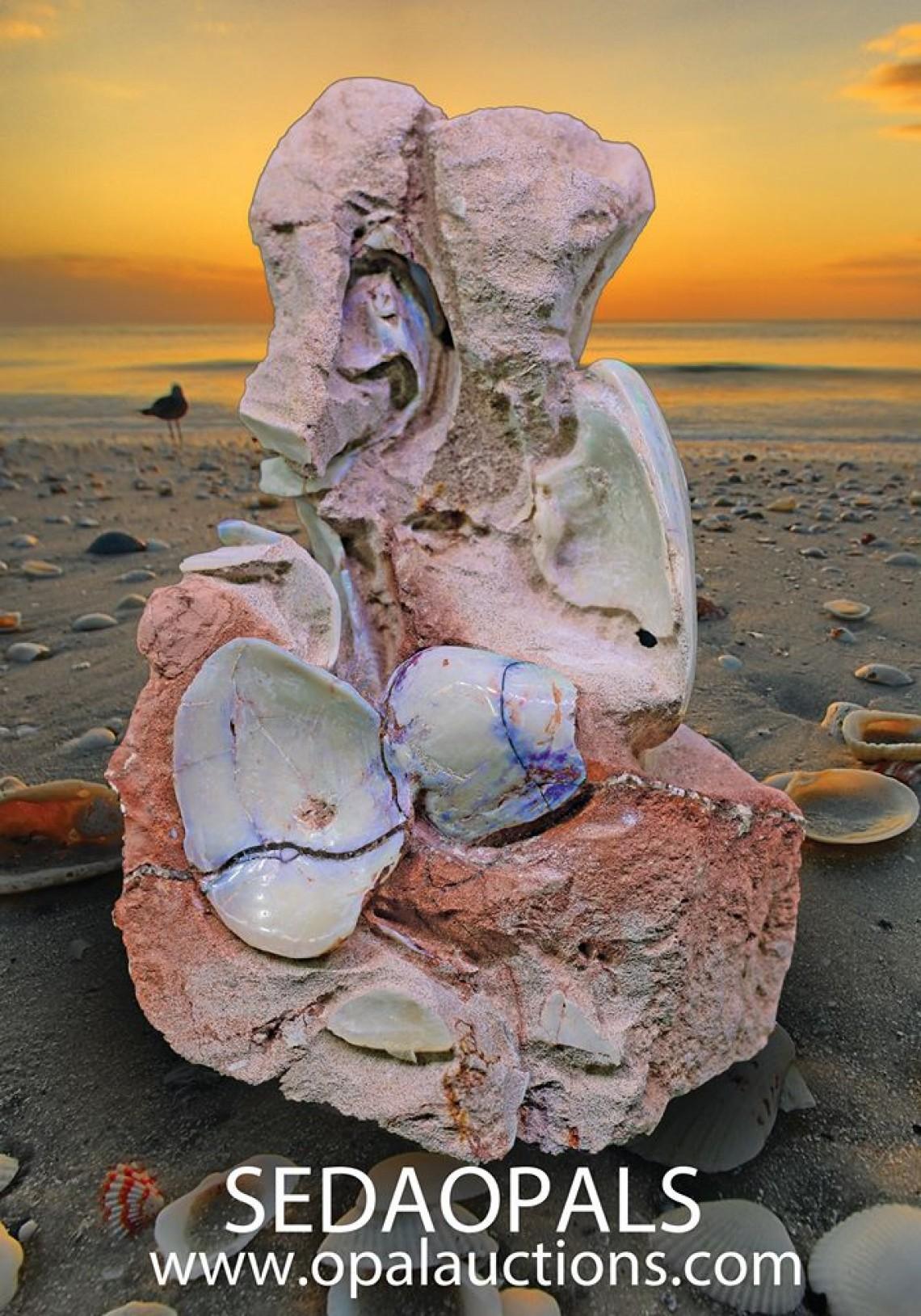 opal shells