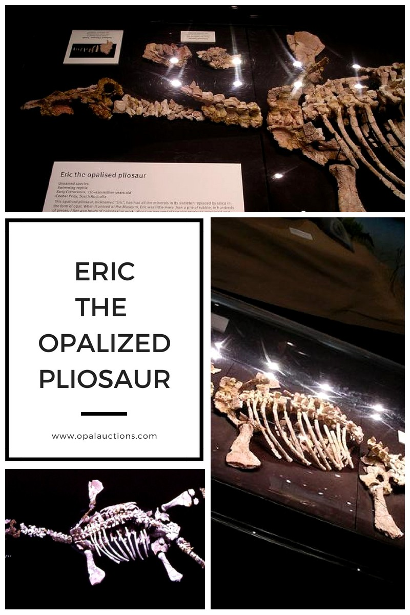 Eric the Opalized Pliosaur