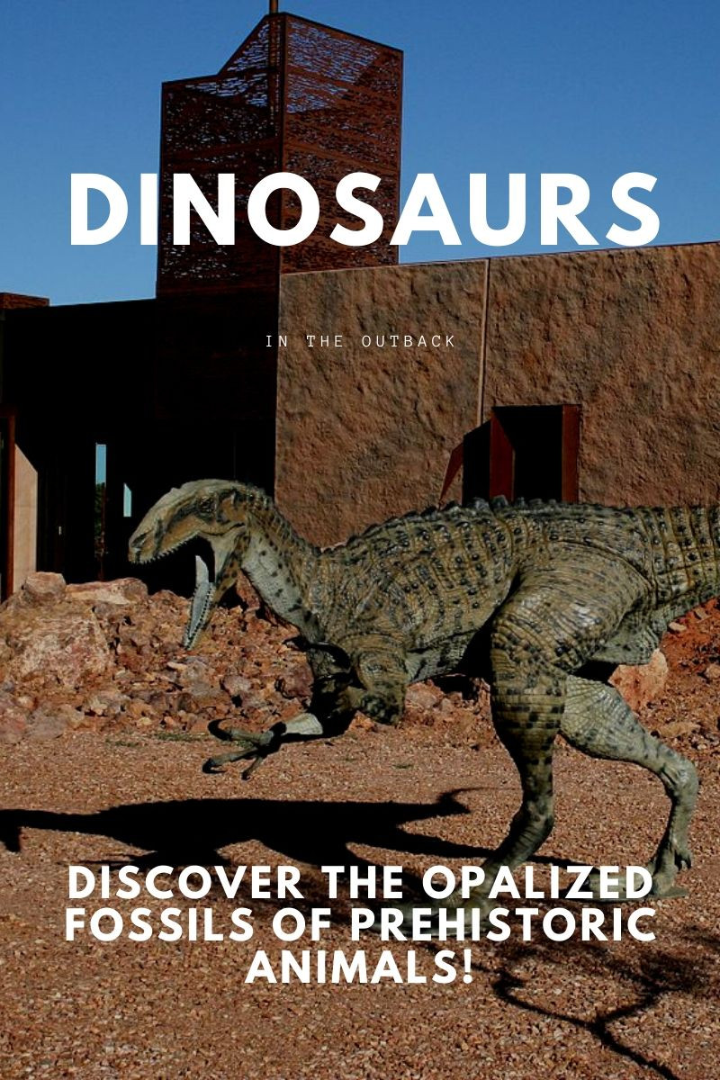 Discover The Opalized Fossils Of Prehistoric Animals