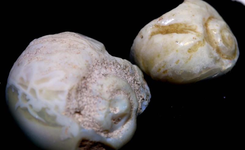 27.90 cts opalised gastropod snail coober pedy pair FO-1491