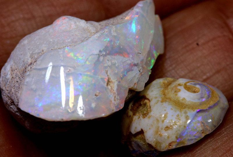 14.65 cts opalised gastropod snail coober pedy pair  FO-1507
