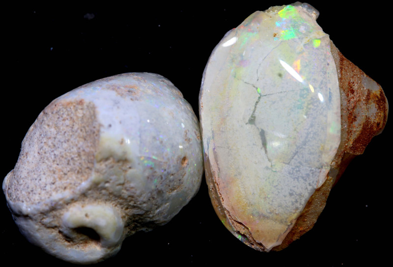15.85 cts opalised gastropod snail coober pedy pair  FO-1508