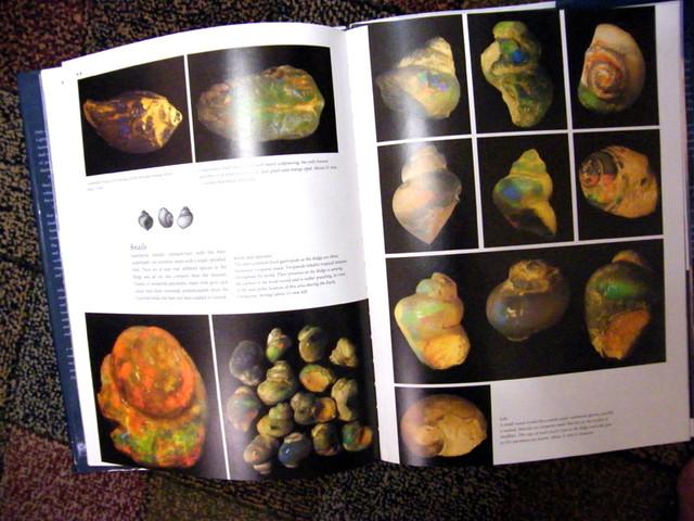 BLACK OPAL FOSSILS OF L.RIDGE-BOOK ON FOSSILS