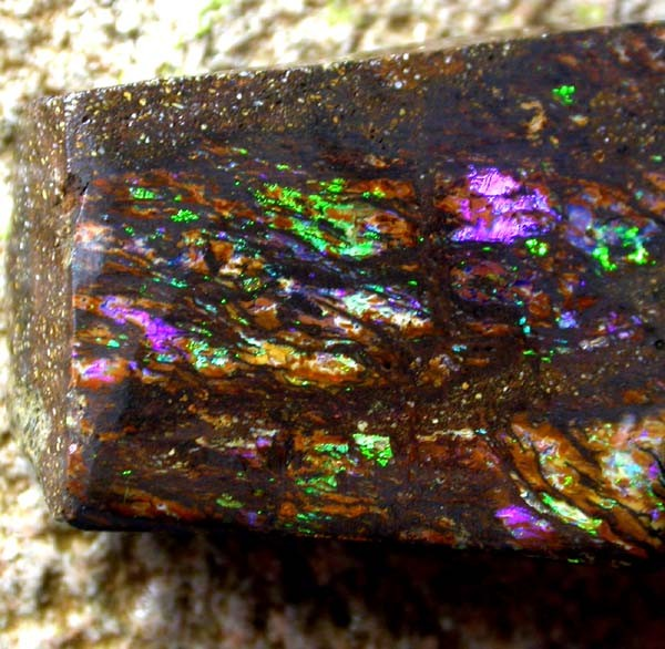 BOUGHER WOOD FOSSIL ROUGH 41 CTS [BY2129]