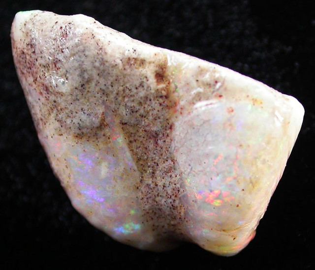 Nice formation of shell end with great colour