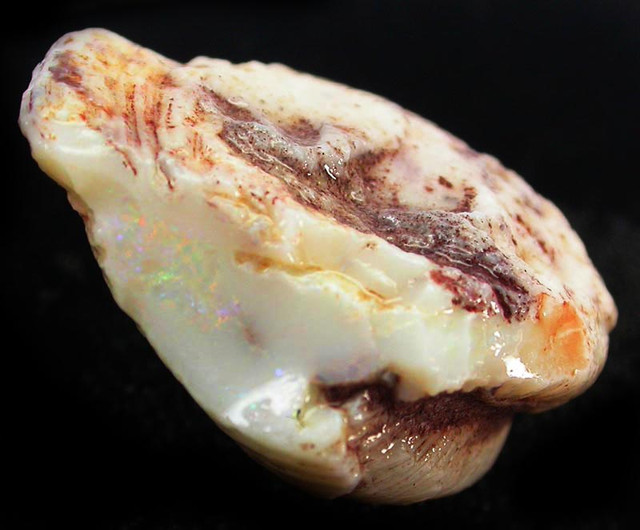 71.95 CTS  NATURAL SHELL FOSSIL FROM COOBER PEDY- [SP2810]