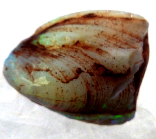 OPALIZED FOSSIL SHELL C/P 70.8  CARATS JO 2077