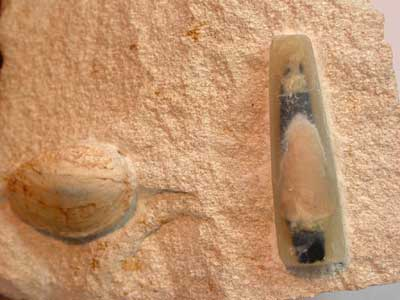 OPAL FOSSIL SPECIMEN FROM LIGHTNING RIDGE AND COOPER PEDY - [F12 ] 296
