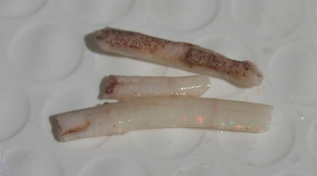 LIghtning Ridge Opal Worms!