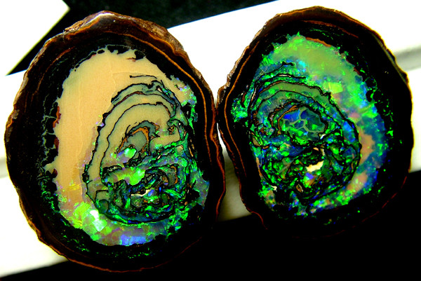 KOROIT OPAL NUTS INVESTMENT - COLLECTOR PC 160.35 CTS