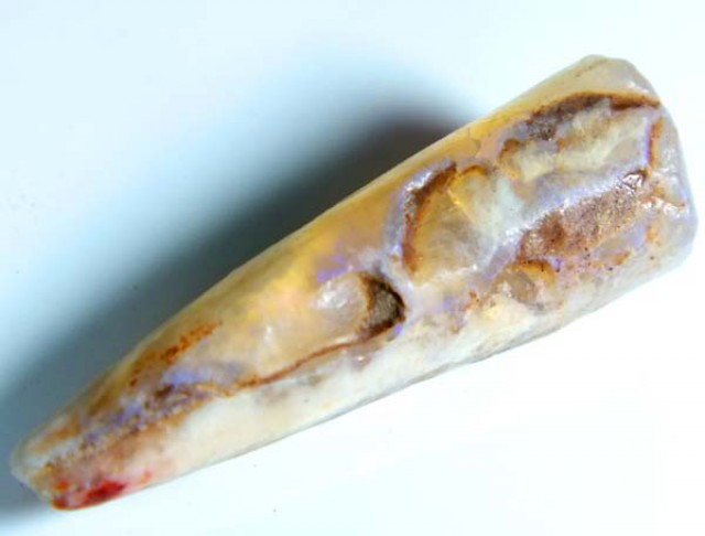 FOSSIL BELEMNITE 12.30  CTS FO-79