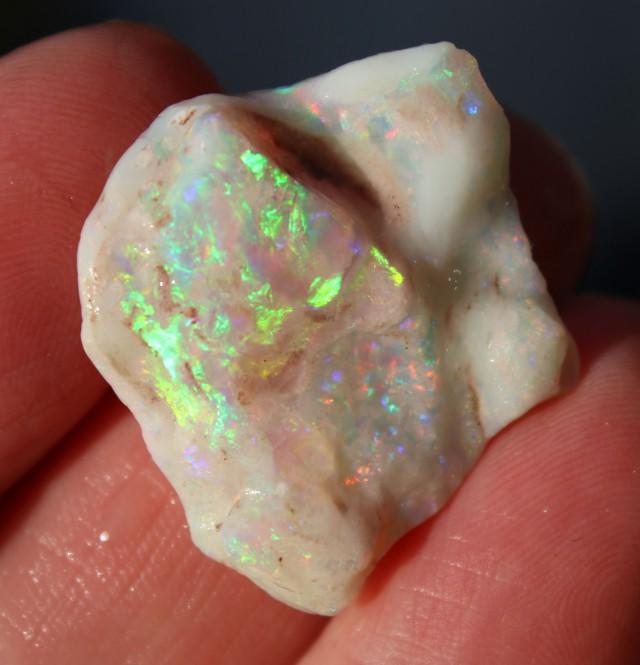 Beautiful Opalized Shell 24 carats REDS