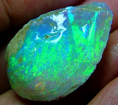 23.50 CTS OPALISED mussel shell gem grade collector item L RIDGE