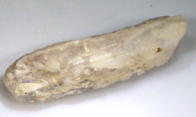 15 CTS FOSSIL BELEMNITE  FO-336