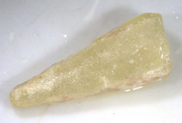 10 CTS FOSSIL BELEMNITE  FO-368
