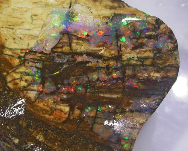 123CT   Fossil Boulder Opal specimen BU 1008