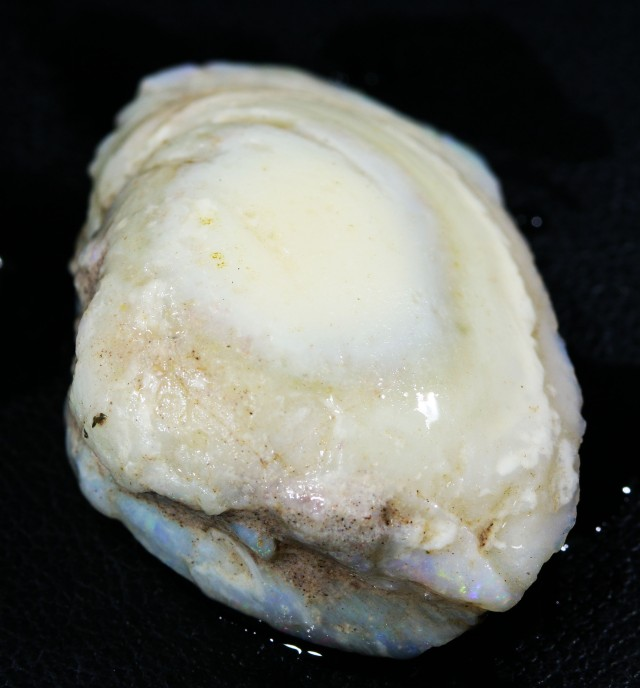 32.05 CTS NATURAL SHELL FOSSIL  [CP358]