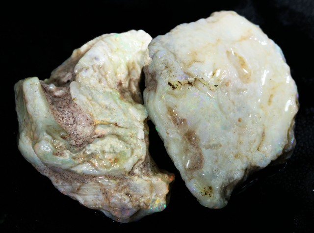 76.25 CTS  NATURAL  SHELL FOSSIL PAIR  [CP359]