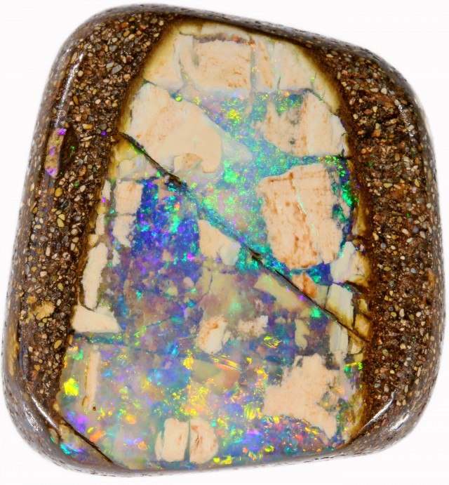 16.7 CTS BOULDER WOOD FOSSIL-WINTON [SO7669]