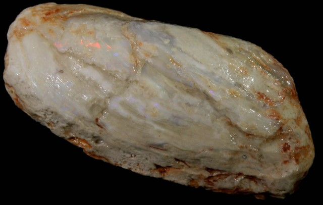 95.55 CTS LARGE MUSSEL SHELL FROM LIGHTNING RIDGE [SOF16]