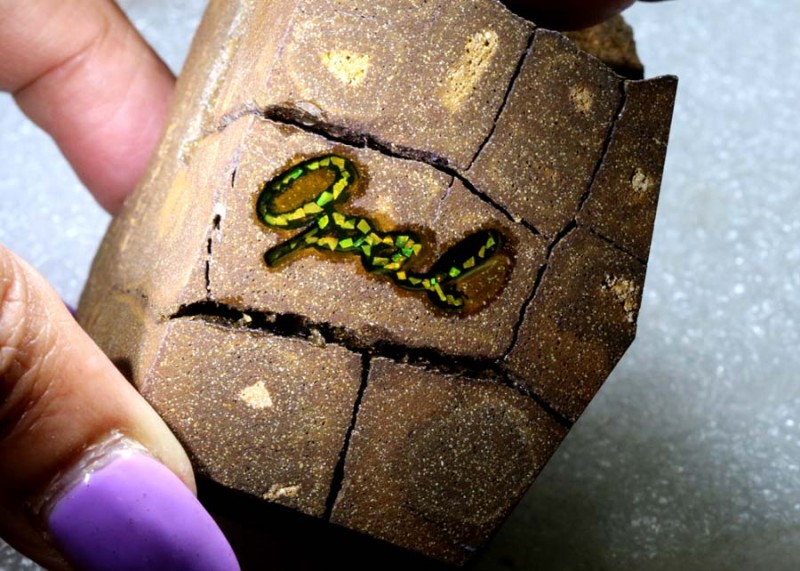 1000CTS BOULDER OPAL ROUGH + INLAY DT- 7572