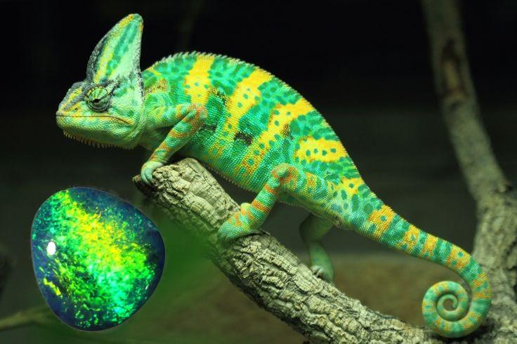 3.10Cts  Black Opal  ,Reptile skin N1  SU 539