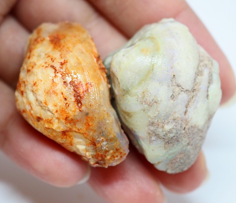 93.35CT CLAMS AND MUSSELS SHELL FROM LIGHTNING RIDGE OI566