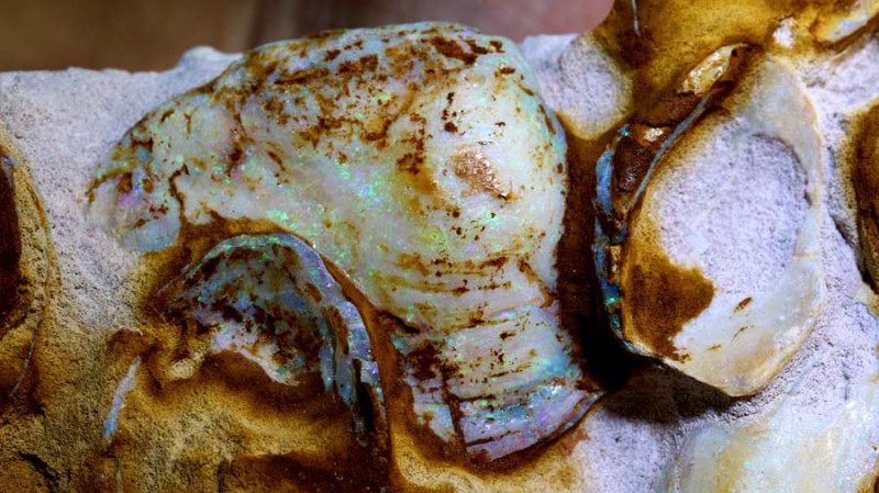 7,670cts-Mussels Shells  on Natural Matrix CretaceousCooberpedy Fo-809
