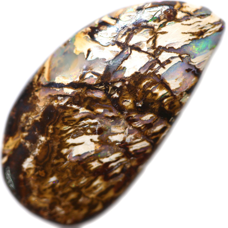 18.35 CTS BOULDER WOOD FOSSIL WELL POLISHED[BMA8998]