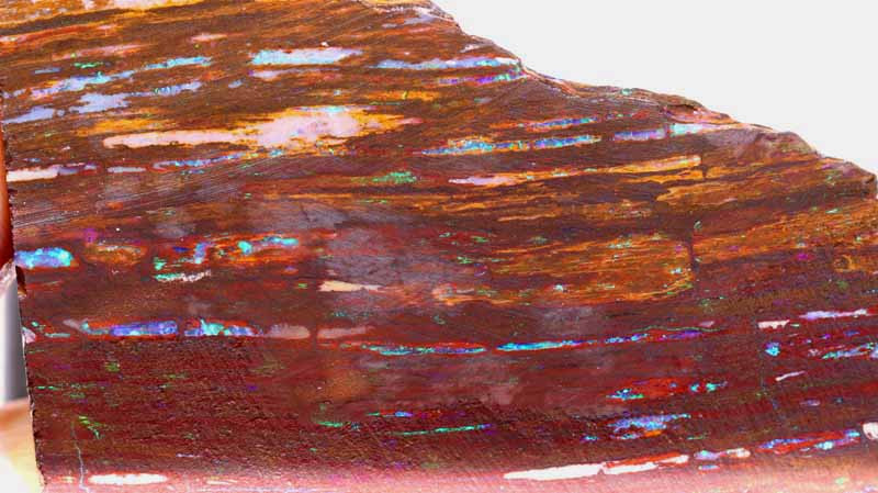 368-CTS BOULDER WOOD FOSSIL ROUGH DT-A782