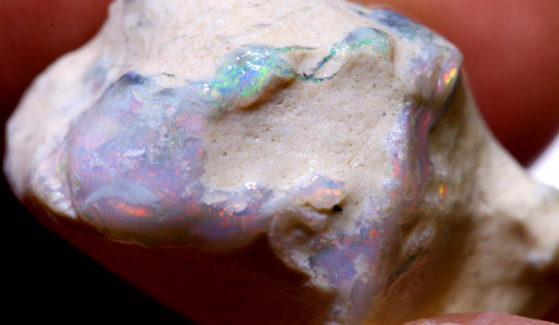 31.40 CTS    CLAM SHELL OPALISED FOSSIL  FO-1123